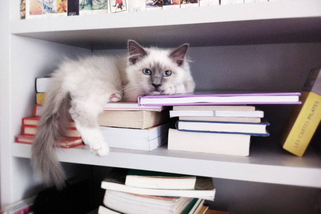 Nonjetable-Oak-Gray-Library-with-Cat